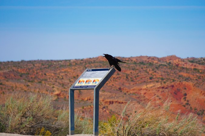 Crow at Arches NP.jpg